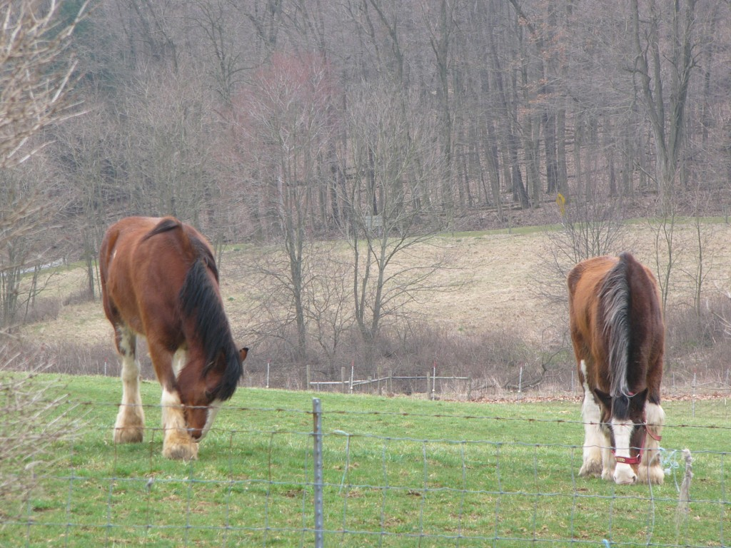 Horses at Malabar Farm