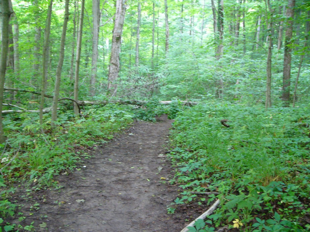 Hueston-Woods-Hiking-Trail