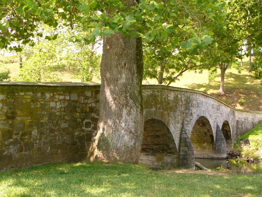 Burnside-Bridge-Witness-Tree-Antietam